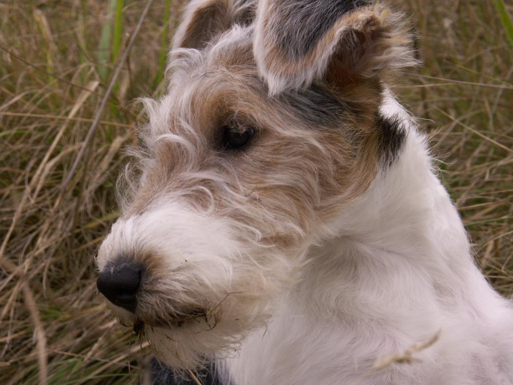 khog's Profile Picture