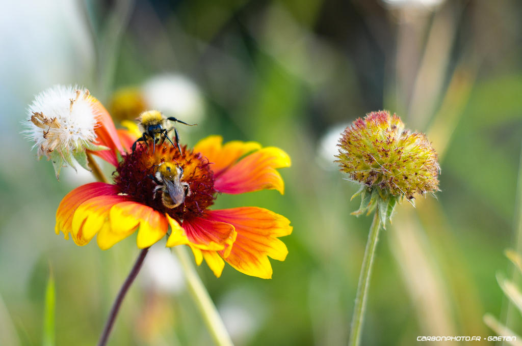 Bees by Attila-Le-Ain