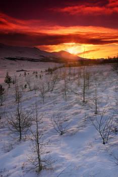 ICELAND - temporary area