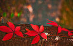 bloody autumn by PatiMakowska