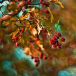 autumn from my dreams by PatiMakowska