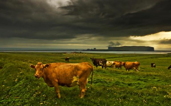 ICELAND -  the storm by PatiMakowska