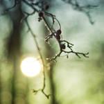 sun playing hide and seek I by PatiMakowska