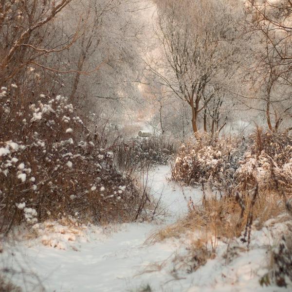 come back winter . by PatiMakowska