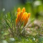 somewhere in the grass by PatiMakowska