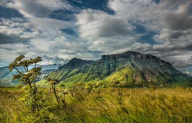 Iceland - Summer allready by PatiMakowska