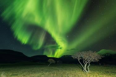 African prairie- in Iceland