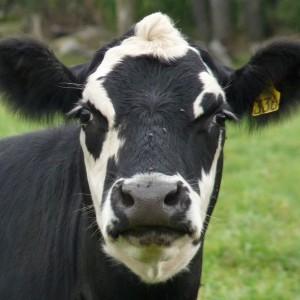 altamiranop's Profile Picture