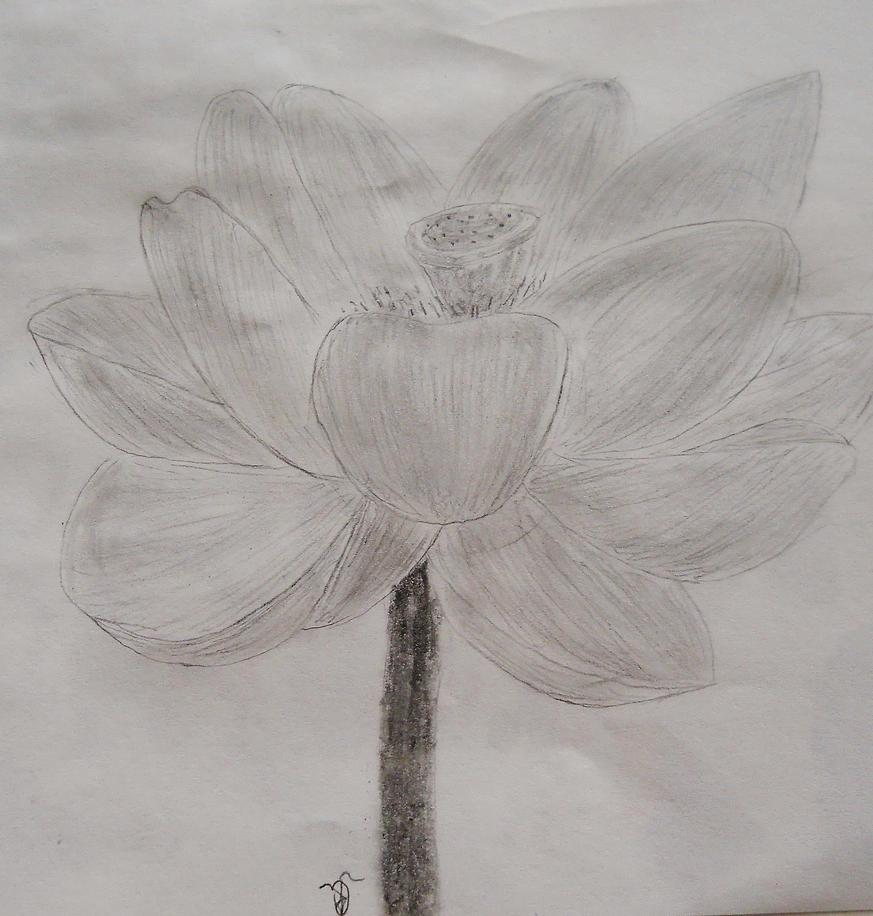 Flower by Hawkshadow89