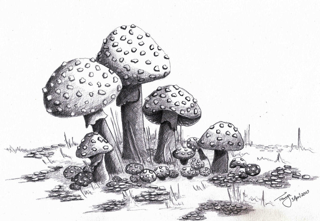 Mushrooms by elentarri on deviantart for Fairy on a mushroom drawing