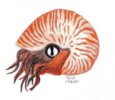 Nautilus by Elentarri