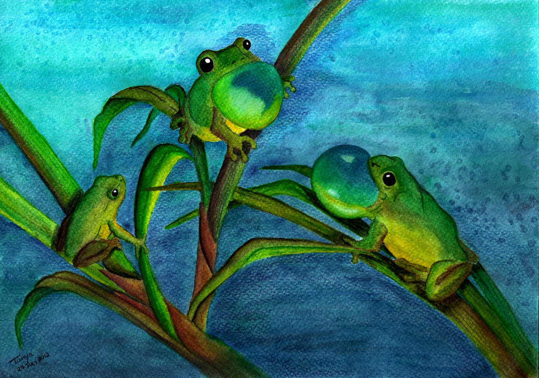 Singing Frogs by Elentarri