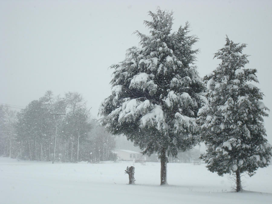 Christmas Trees by FrankieAlton