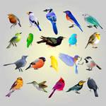 vector birdy