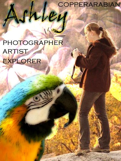 copperarabian's Profile Picture
