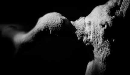 Wood bones by copperarabian