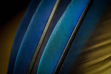 Macaw feathers by copperarabian