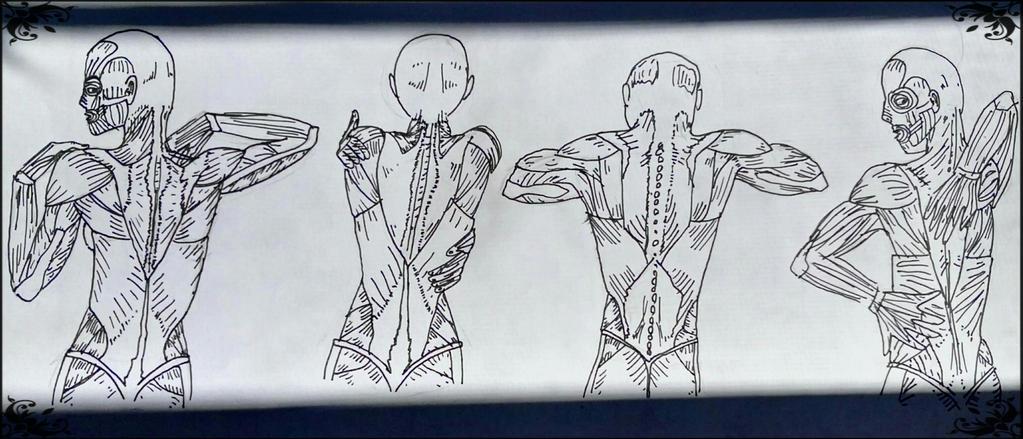 Back Muscle Anatomy Practice by MajicJane on DeviantArt
