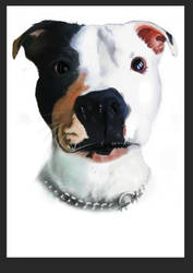 A Staffy Dog by missimoinsane