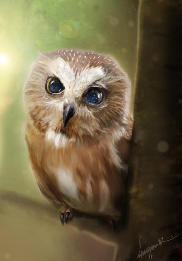 [Image: owl_right_by_missimoinsane-darm2ft.jpg]