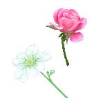 Pixel Flower Studies by rainedragon