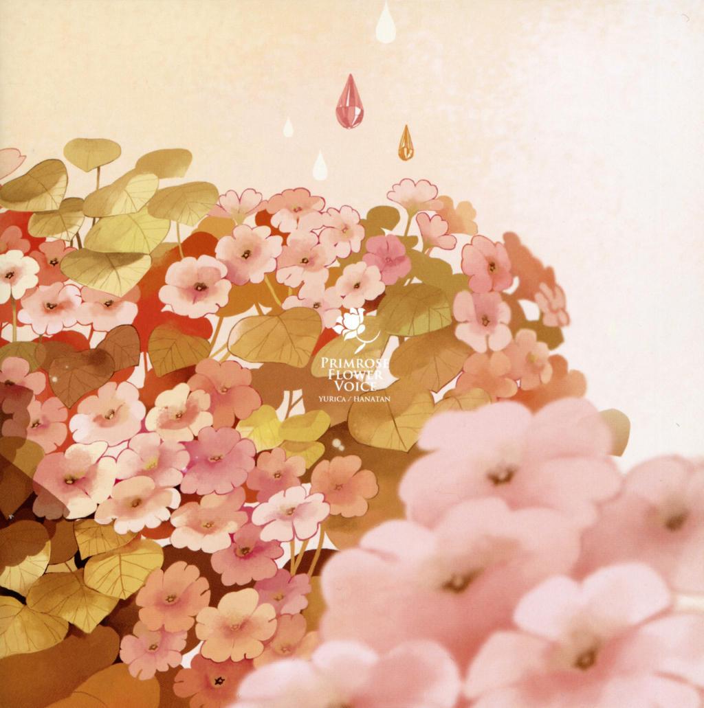 120 Evening Primrose - sacredessences.com