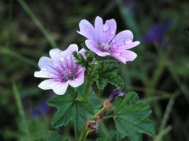 Flower by oneofakindgurl