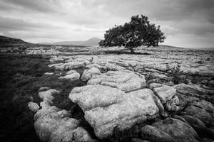 all alone the tree of knowledge lives by DegsyJonesPhoto