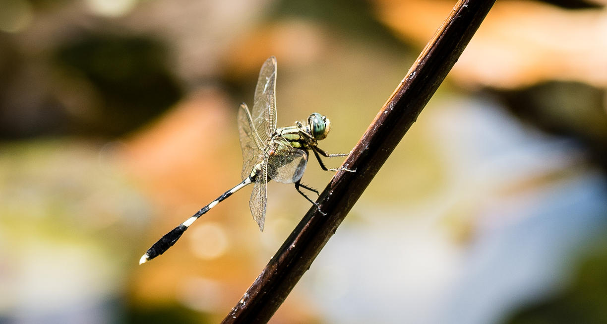 Dragon Fly by DegsyJonesPhoto