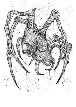 thy aranea mentula