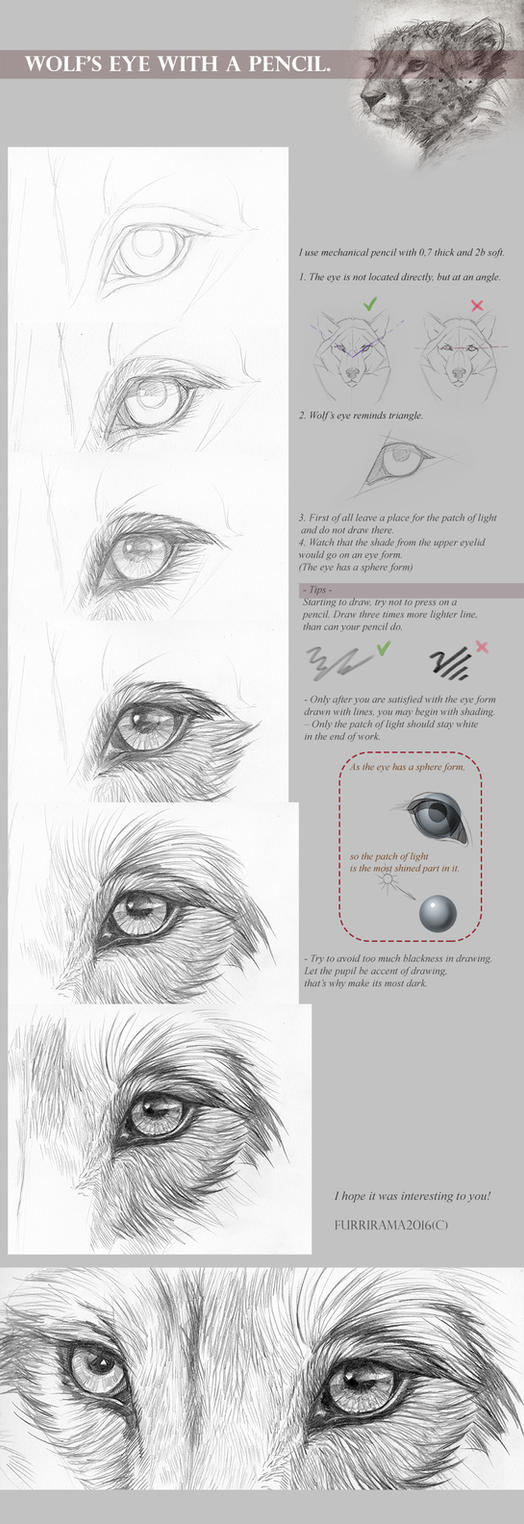 Tutorial: Wolf\'s eye with a pencil by Furrirama on DeviantArt
