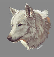 Commission Wolf Portrait