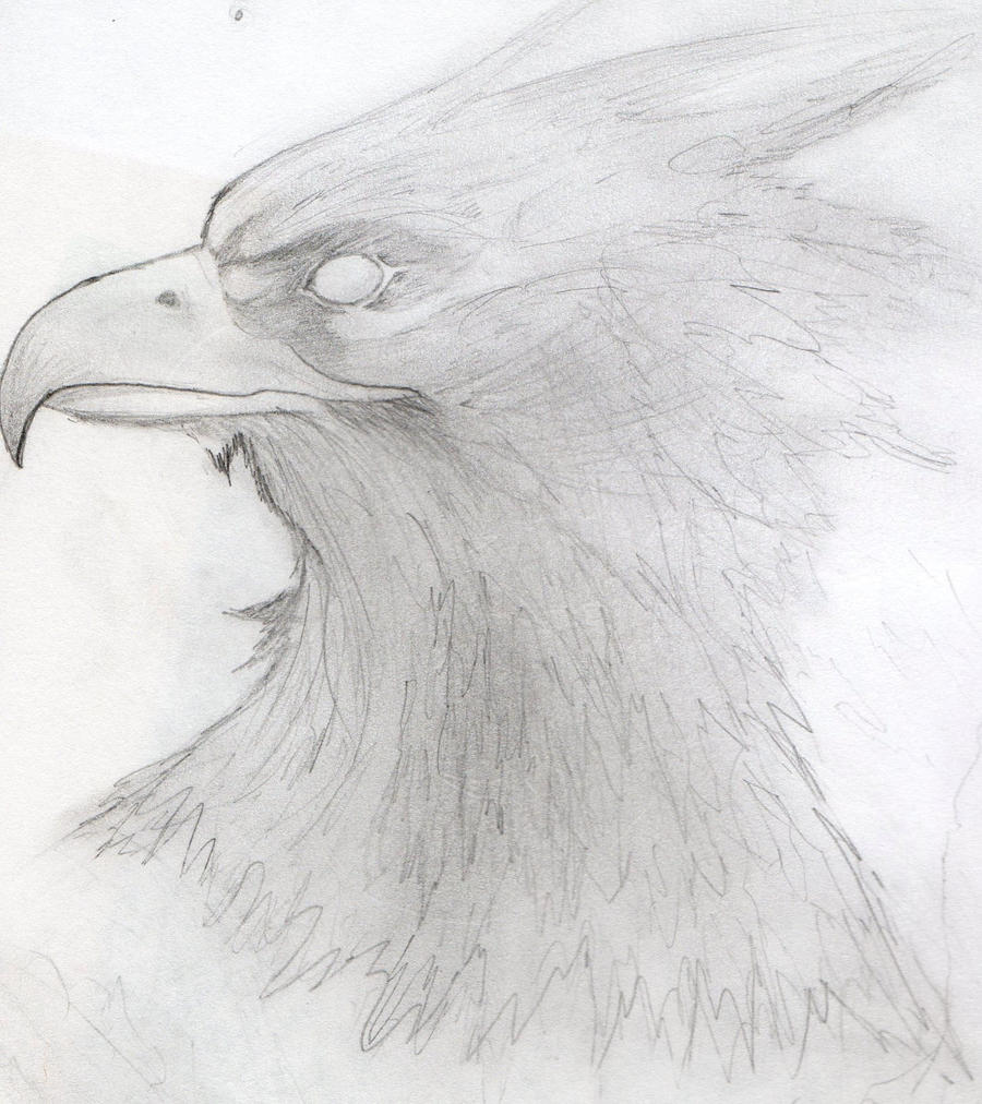 Phoenix Pencil Sketch by A-Fragile-Smile on DeviantArt