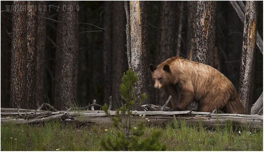 On the Forest's Edge by tourofnature