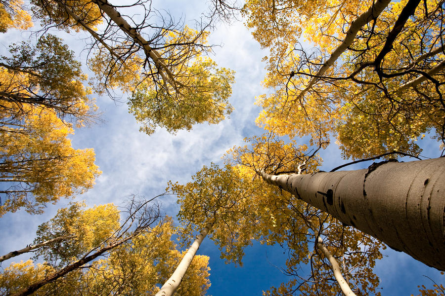Fall Perspective- DA Contest by tourofnature