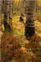 Autumn Technicolor by tourofnature