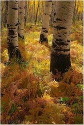 Autumn Technicolor