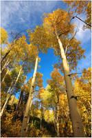 Autumness by tourofnature