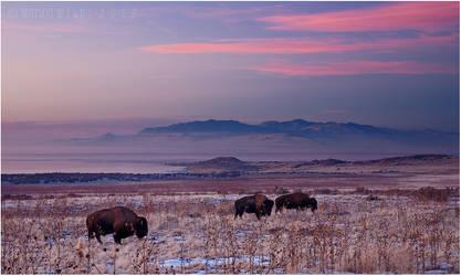 Winter Grazing by tourofnature