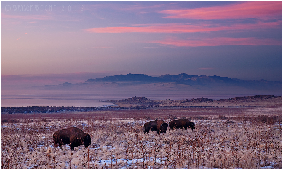 Winter Grazing by tourofnature