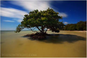Mangroves n' Moonlight