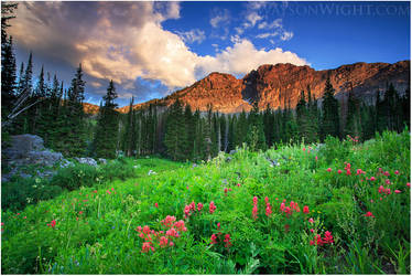 Indian Paintbrush and Evening Light