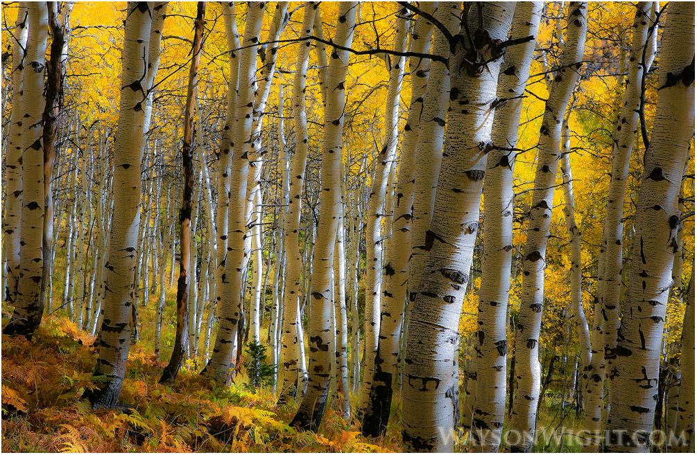 Autumn Light by tourofnature