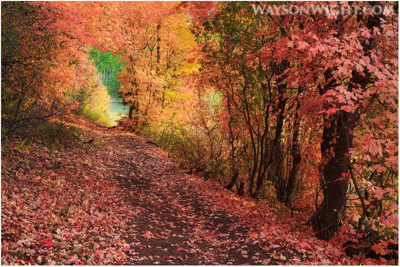 Autumn's Corridor by tourofnature