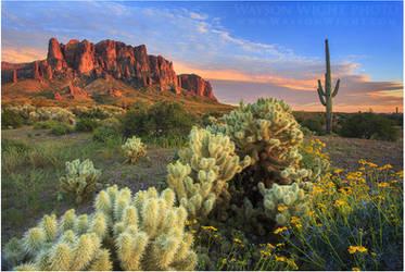 Arizona's Desert by tourofnature