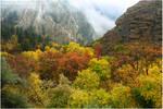 Autumn Kaleidoscope by tourofnature