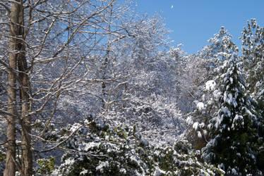 Winter Wonderland - Atlanta by conbot