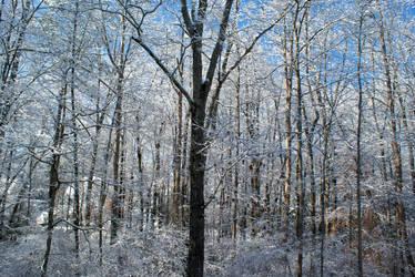 Winter Wonderland - Atlanta 2 by conbot