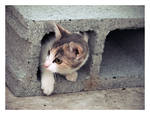 Another Cat in the Wall