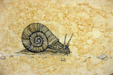 Snail by paintedmookers